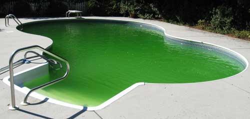 invasion d'algue - piscine verte, que faire?